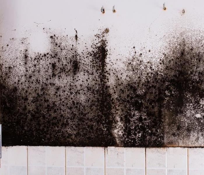 How To Stop Black Mold In Its Tracks